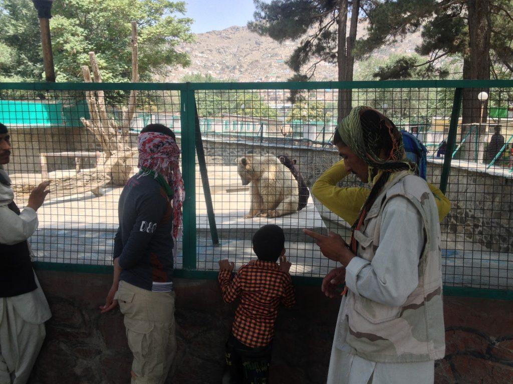 Afgańczycy oglądają niedźwiedzia polarnego w Kabulskim Zoo