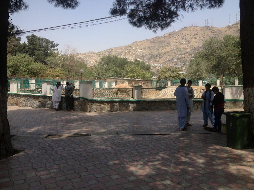 Afgańczycy w Zoo w Kabulu oglądają wielbłądy na tle wzgórza Telewizyjnego