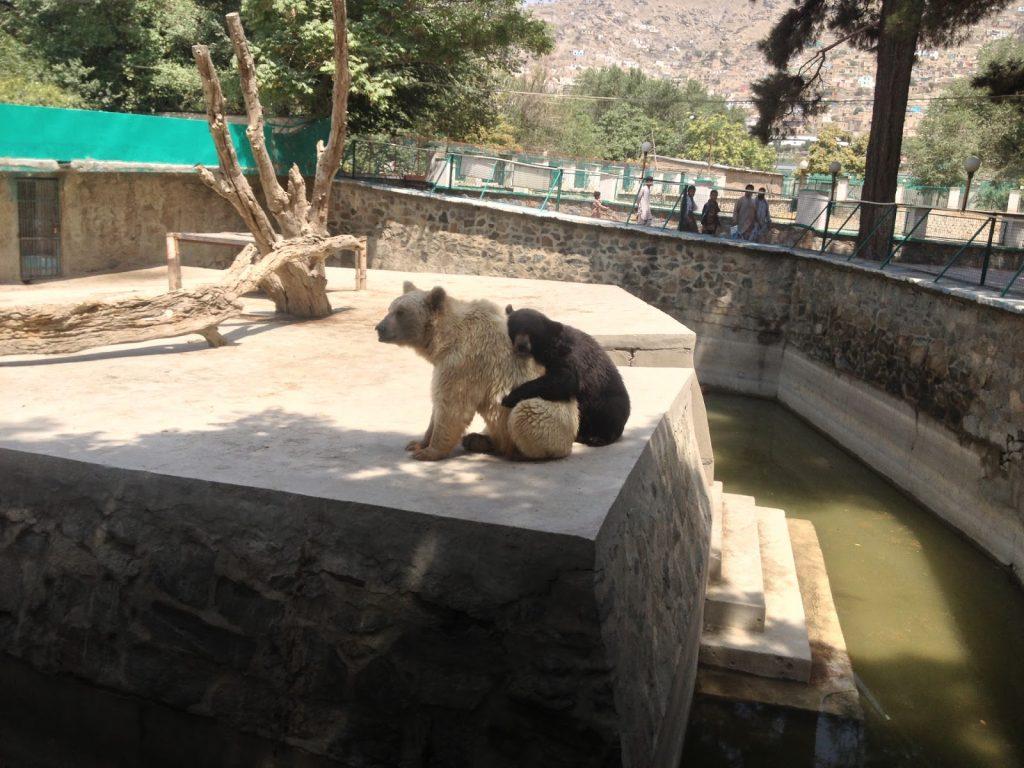 Niedźwiedź Polarny i brązowy tulą się do siebie w Zoo w Kabulu