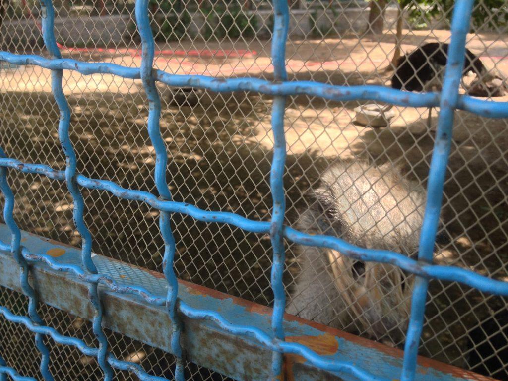 Struś z ADHD w Kabulskim Zoo - coś z nim serio było nie tak