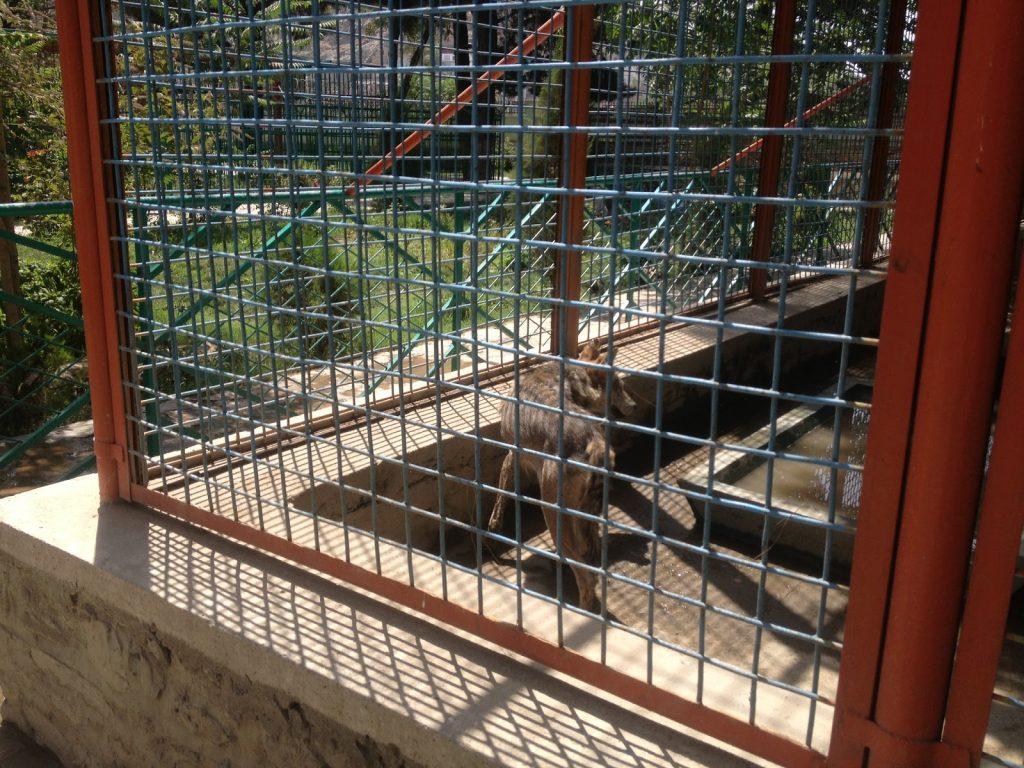 W zoo w Kabulu można też było znaleźć wychudzone wilki