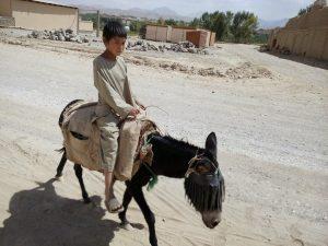 Chłopiec jadący na osiołku w Bamyan, Afganistan
