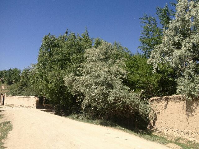 Okolice Kabulu - Krzaki, rzadki to widok
