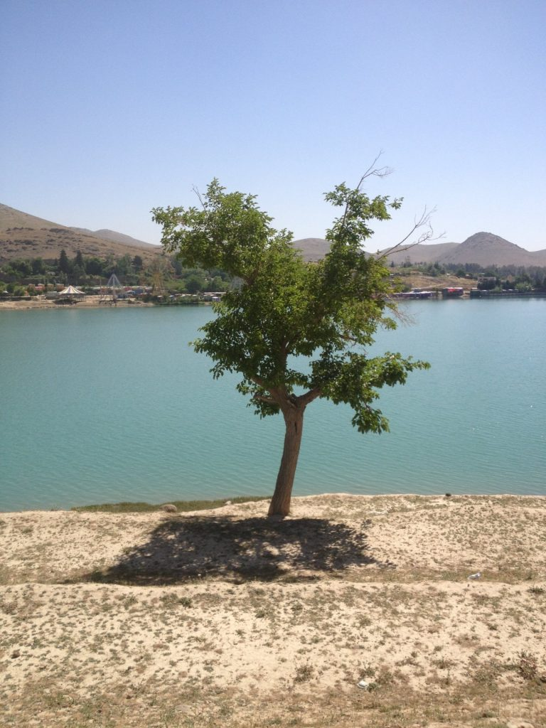 Samotne drzew nad brzegiem jeziora Qargha w Kabulu