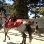 Piękny koń na ulicach Kabulu