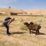 Afganistan daje wiele możliwości do obcowania ze zwierzętami