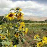 Sielskie widoki w dolinie Bamyan