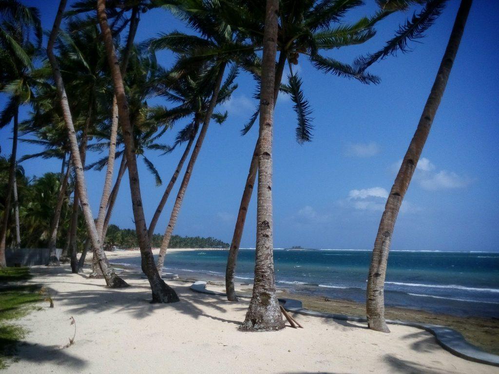 Palmy i plaża na wyspie Siargao w pobliżu general Luna