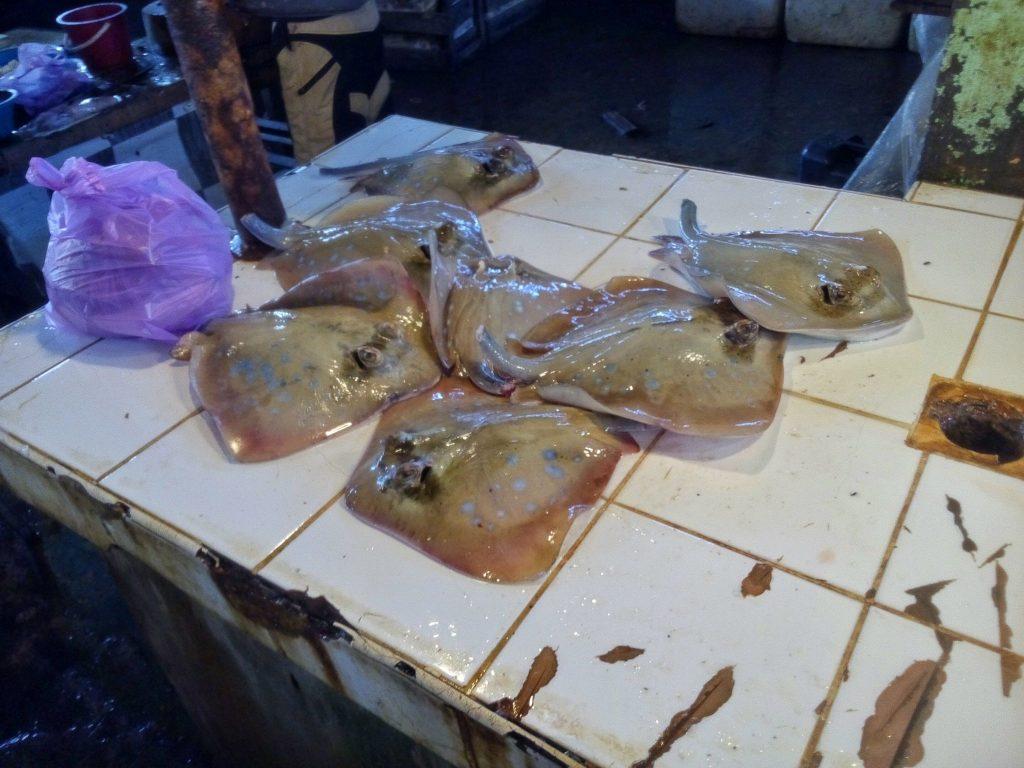 Płaszczki do kupienia na targu rybnym w Dapa na wyspie Siargao
