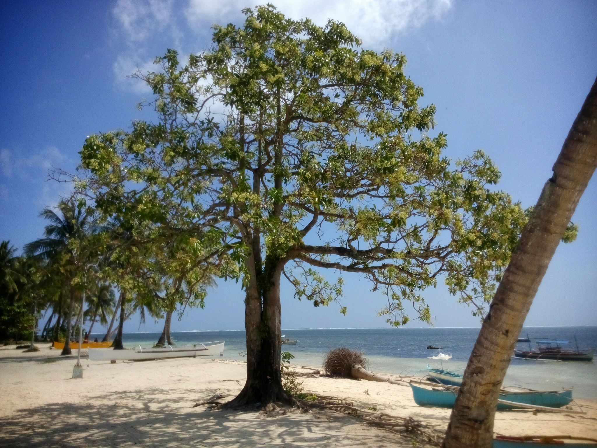 Plaża w General Luna na wyspie Siargao na Filipinach