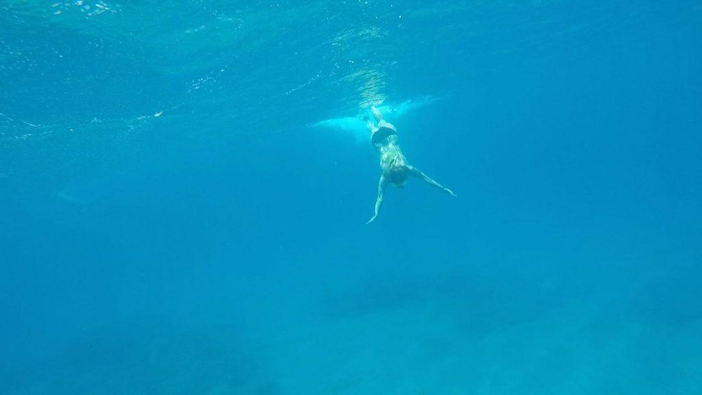 Nurkowanie z żółwiami to niewątpliwie jedna z większych atrakcji Hawajów