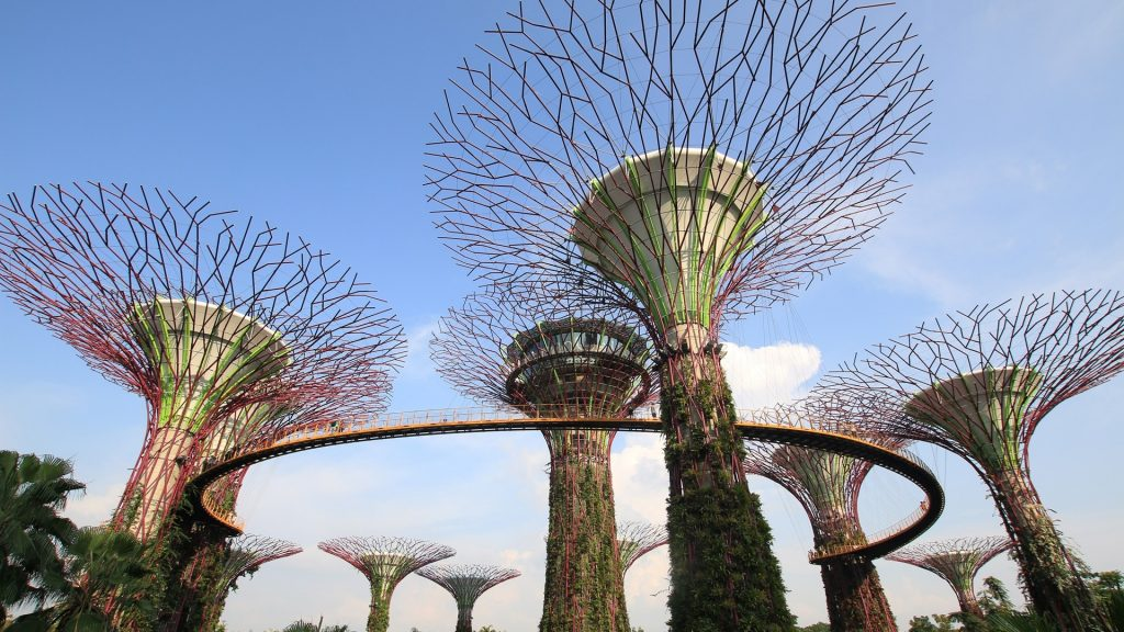 Widok na super drzewa w Gardens by the Bay