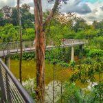 Bagna (wetlands) w ogrodzie botanicznym