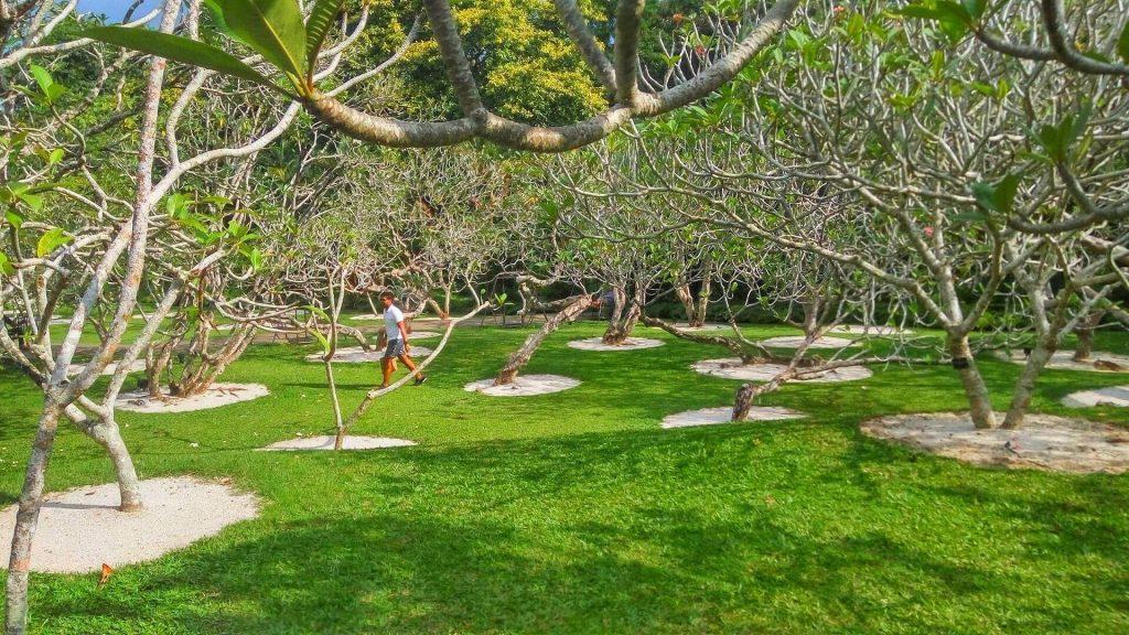 Drzewa które według lokalnych wierzeń przyciągają duchy - cały ogród pełen tych drzew musi wiec być nawiedzony