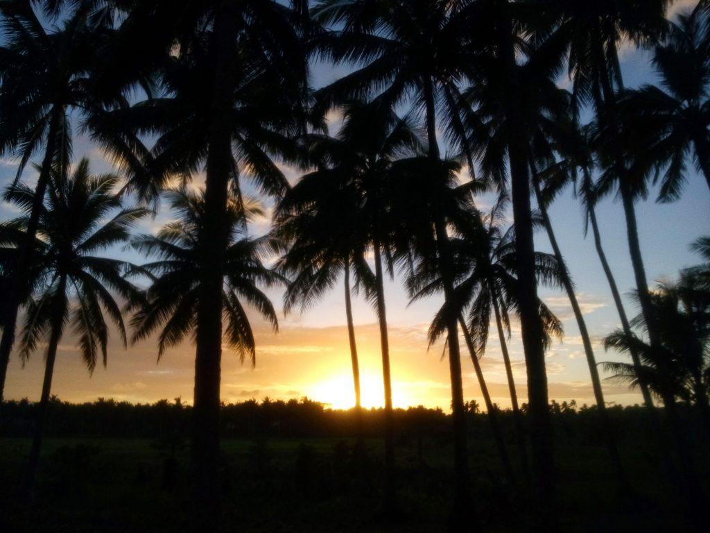 Las palmowy w okolicach Santa Fe na Siargao