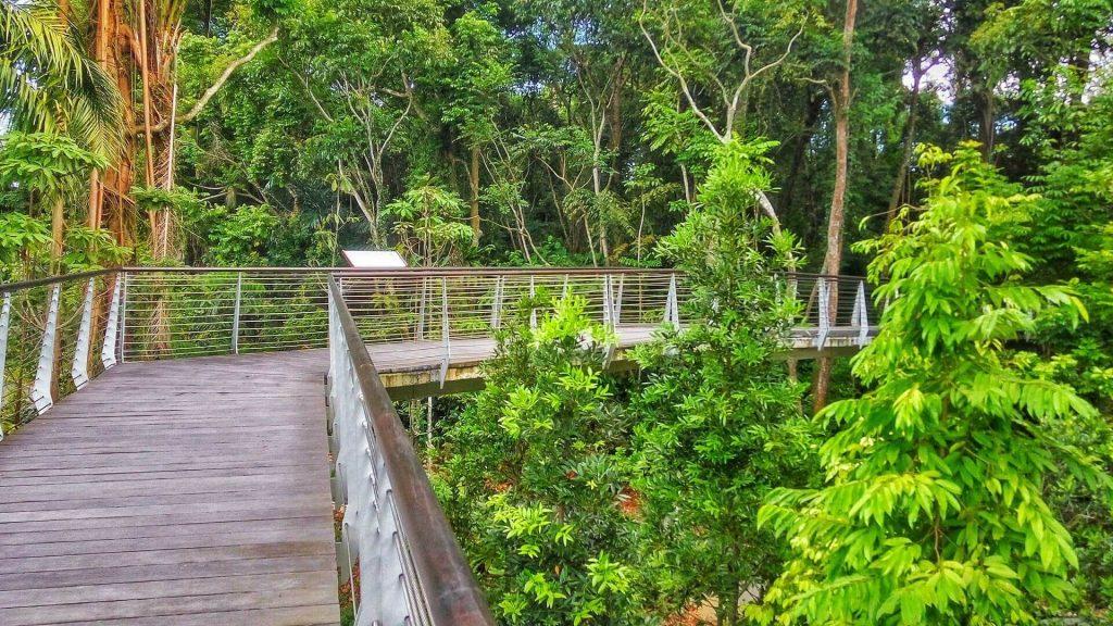 Most i ścieżka nad bagnami