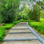 Ogród bambusowy - jedna z nowości z ogrodów botanicznych w Singapurze