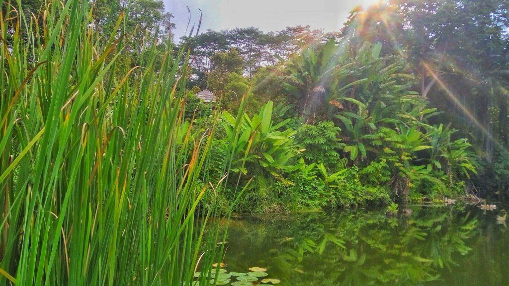 Roślinność wodna z ogrodu botanicznego