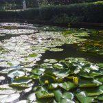 Sadzawka z lilią wodną w ogrodzie botanicznym w Singapurze