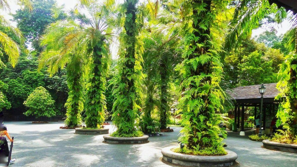 W tropikalnym kraju jak Singapur nie ma problemu z rozrostem roślinności
