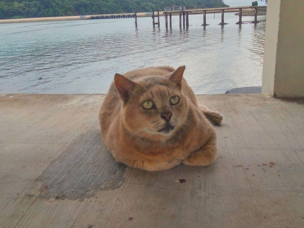 Wejścia na pomost pilnuje jeden z grubszych kotów jakie w życiu widziałem