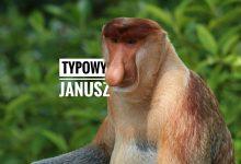 Typowy Janusz jako małpa Nosacz Sundajski okładka postu