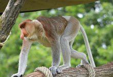 Borneo, kraina leśnych ludzi i typowych Januszy