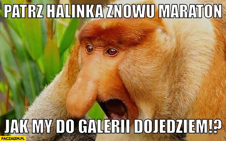 Patrz Halinka, znowu maraton, jak my do galerii dojedziemy?