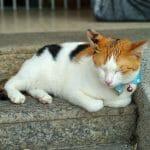 Kot uciął sobie drzemkę na schodach w George Town na wyspie Penang