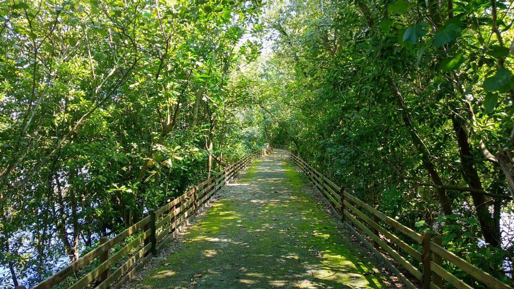 Scieżka w parku Sungei Buloh, płotki po lewej i prawej mają zapobiegać wyjściu krokodyli na ląd