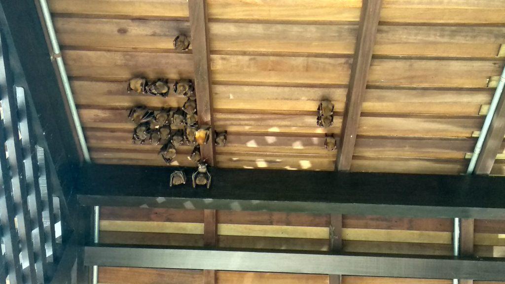 Sungei Buloh to również miejsce bogate w nietoperze