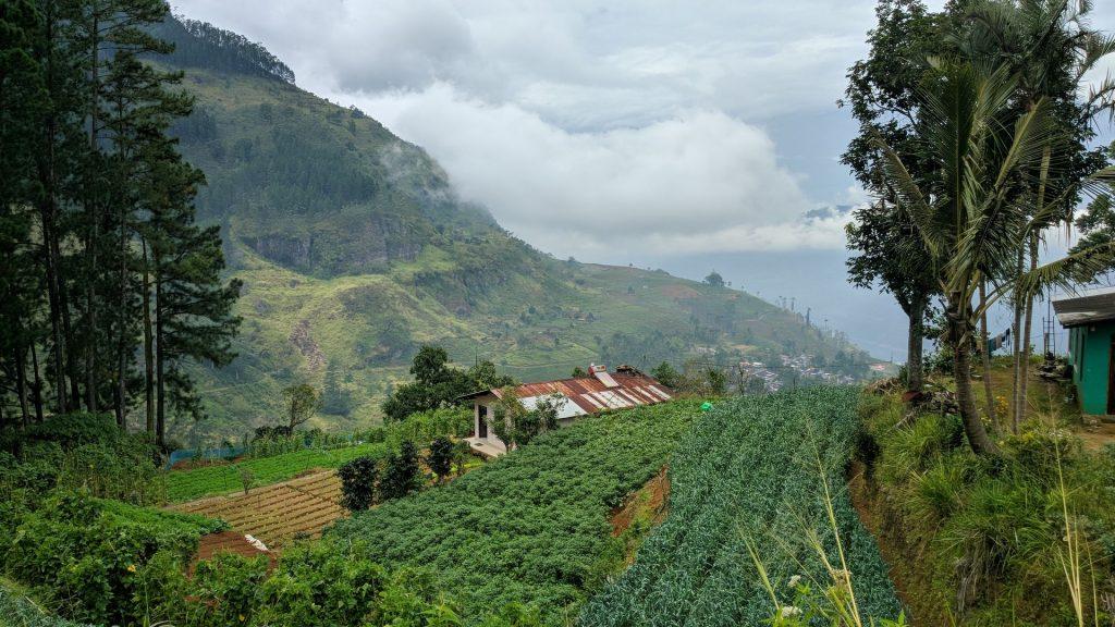 Pola herbaciane na zboczach gór w drodze z Nuwara Eliya do Ella na Sri Lance