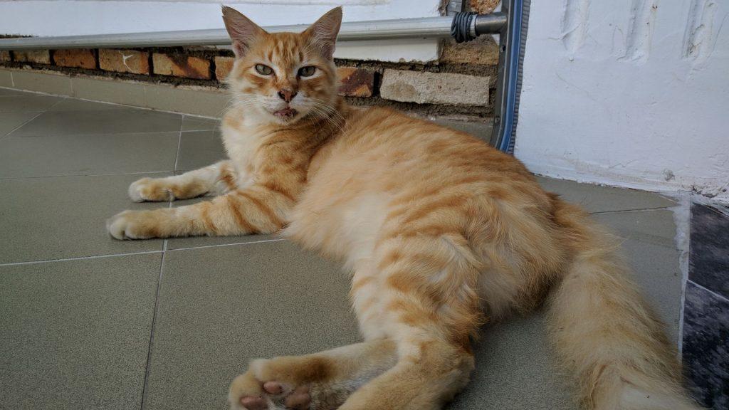 Wypoczywający kot w Colombo na Sri Lance. Miałem nadzieję że może tak jak i on będę się byczyć, ale nie było mi dane.